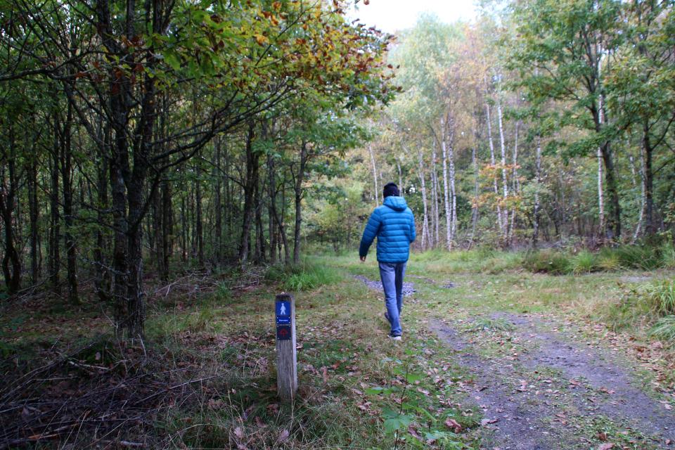 Старая военно-торговая дорога Хэрвайн (Hærvejen) в лесу Стенхольт