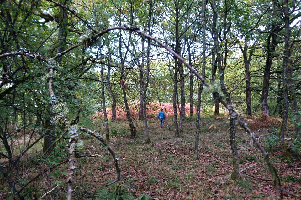 Ветки деревьев поросли лишайником
