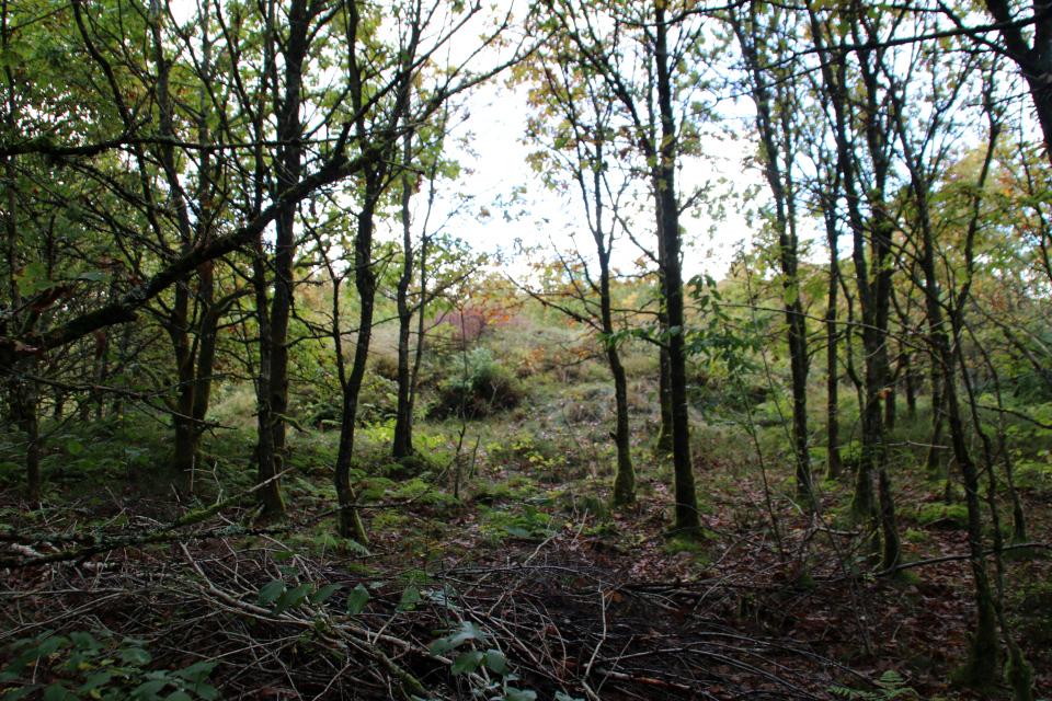 Курган посреди порослевого леса