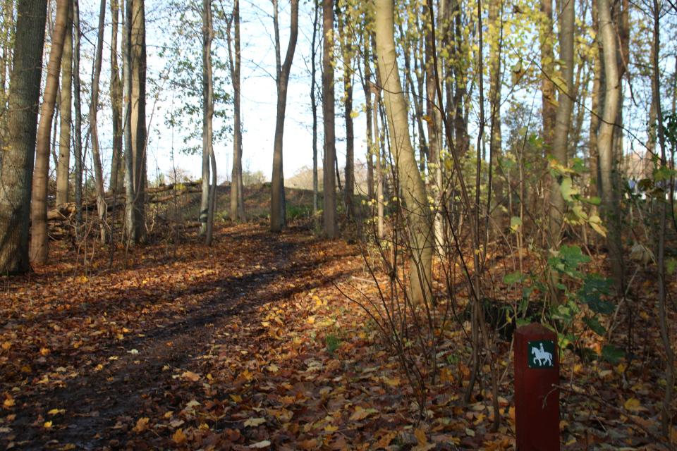 Курган с дольменом в лесу Хёррет возле дорожки для лошадей