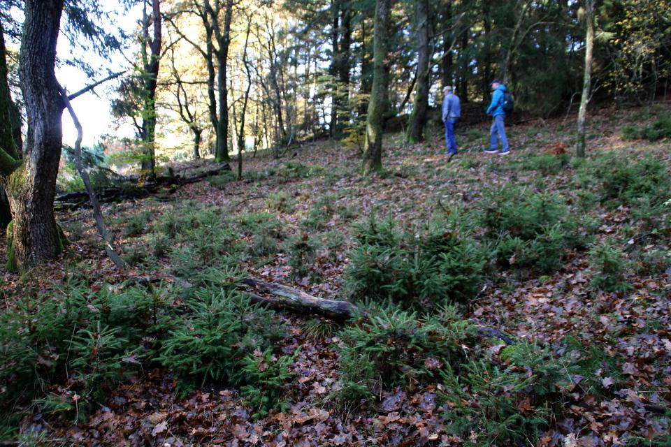 Марк Брейн (Mark Brein), лес. 29 окт. 2020, Дания