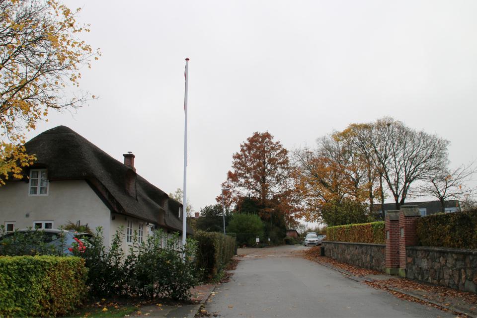 метасеквойя в осеннем наряде, Дания