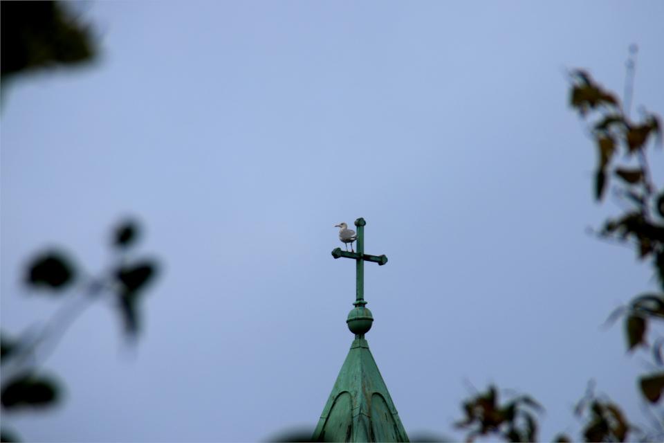 Чайка использует крест для обзора, церковь Обю, г. Обюхой / Åbyhøj, Дания
