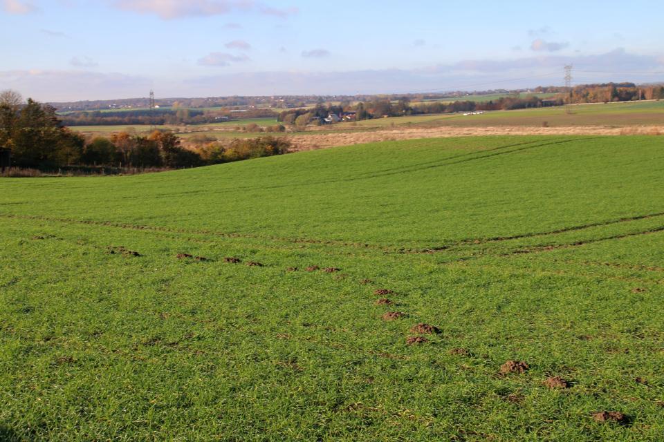 Дорожка с холмиками на поле, проделанная кротами