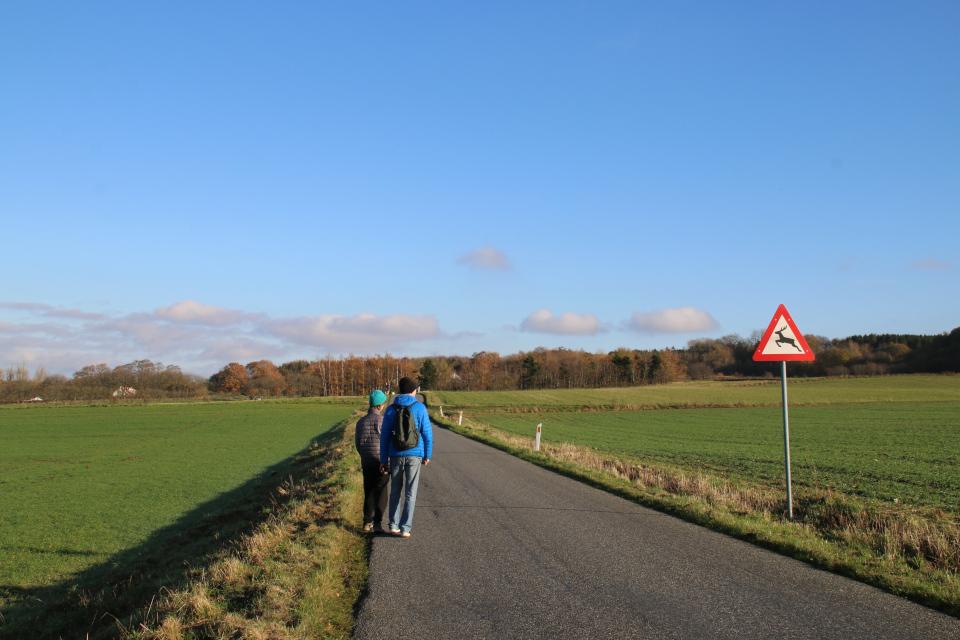 """Дорожный указатель """"Осторожно дикие звери"""" возле дороги. Ставтруп (Stavtrup), Дания"""