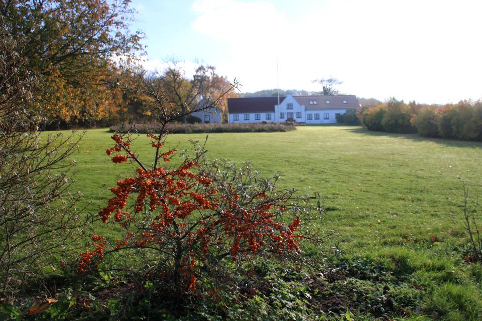 Старое поместье возле дороги. Фото 8 нояб. 2020, Ставтруп (Stavtrup), Дания