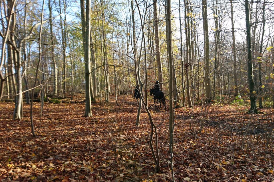 Конные прогулки в лесы Хёррет, г. Морслет, Дания