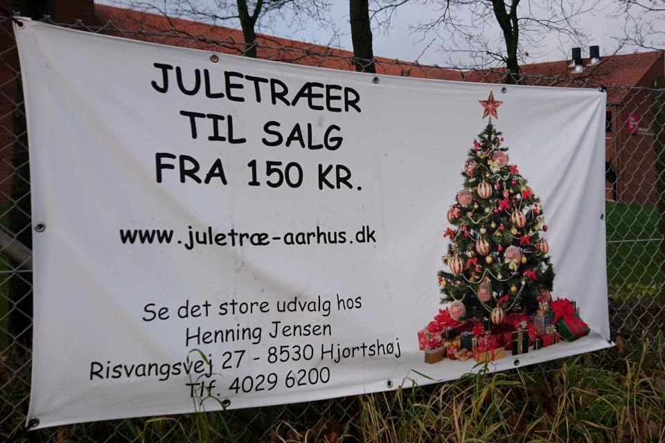 Объявление о продаже рождественских елок