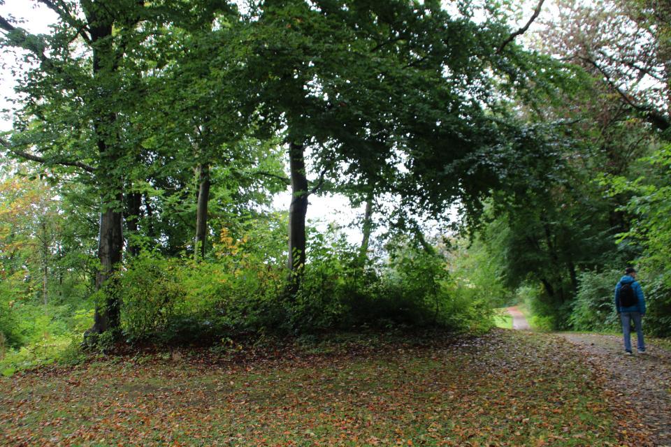 Заросший доисторический курган в королевском парке
