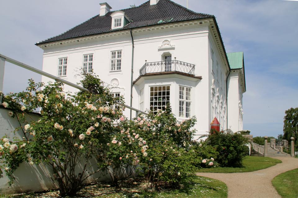 Кусты роз возле дворца Марселисборг. Фото 11 июн. 2020, парк Марселисборг