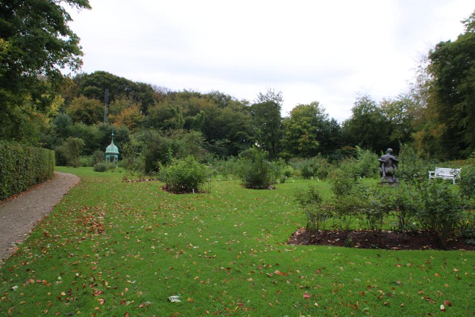 Розарий с отцветшими розами в парке Марселисборг