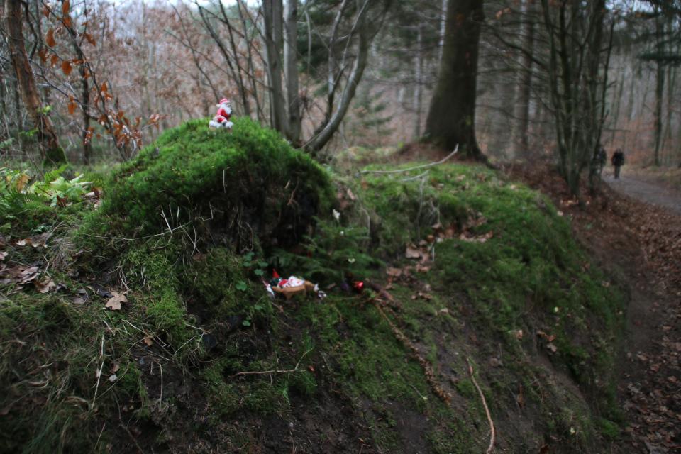Ниссе в лесу Марселисборг, Дания. 13 дек. 2020