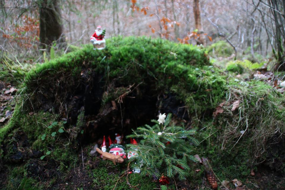 Ниссе в лесу Марселисборг, г. Орхус, Дания. Фото 13 дек. 2020