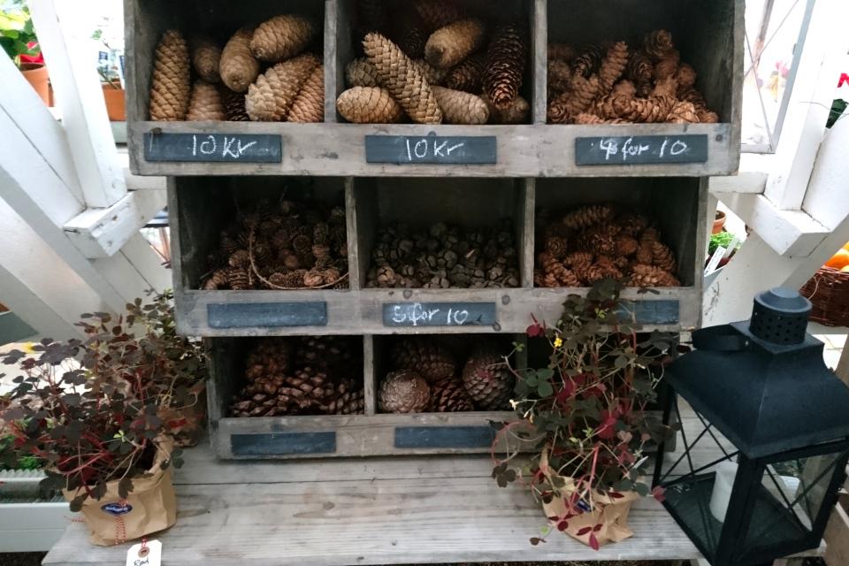 Шишки в розницу - поштучно в магазине Рождества Старого города