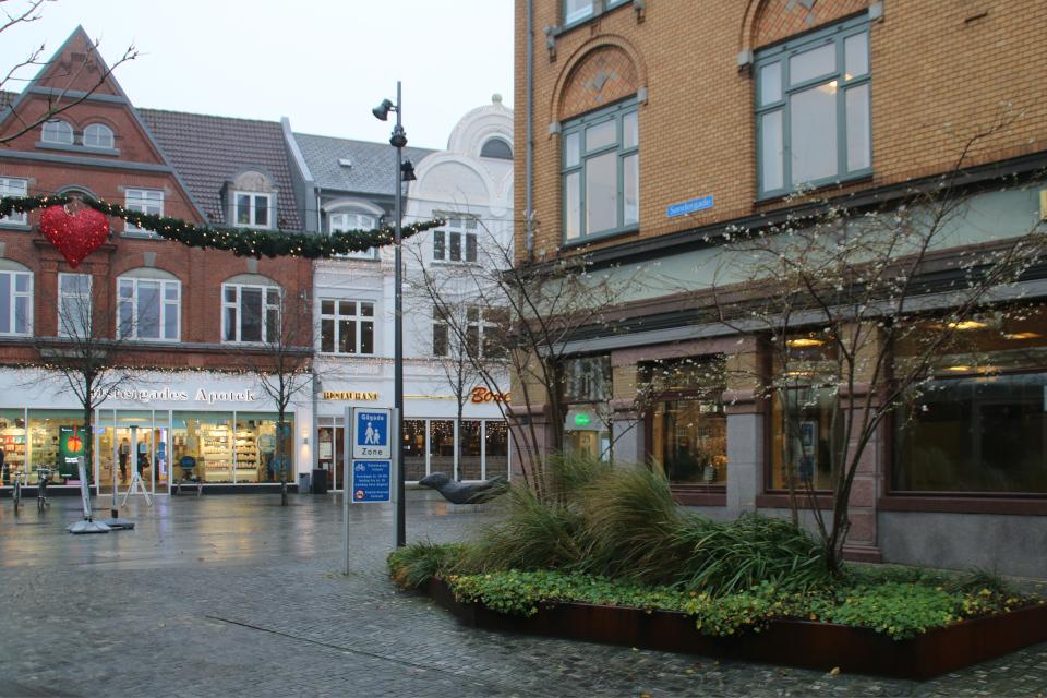 Сакура цветет на рождество, Дания. Фото 15 дек. 2020