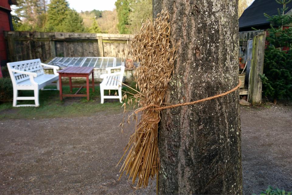 Сноп из овса для птиц, привязанный к дереву