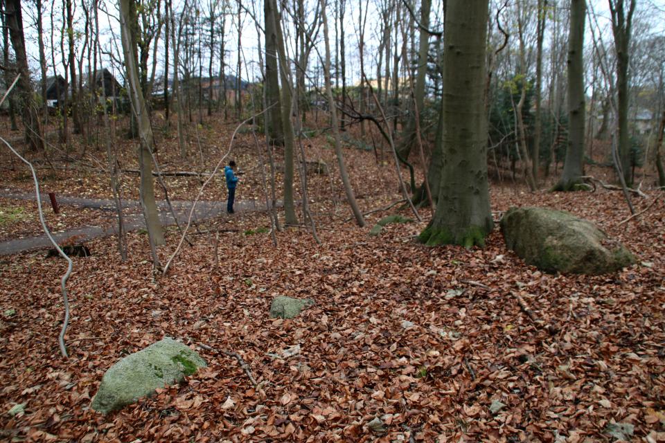 Развалины дольмена в лесу Марселисборг, Дания. 13 дек. 2020