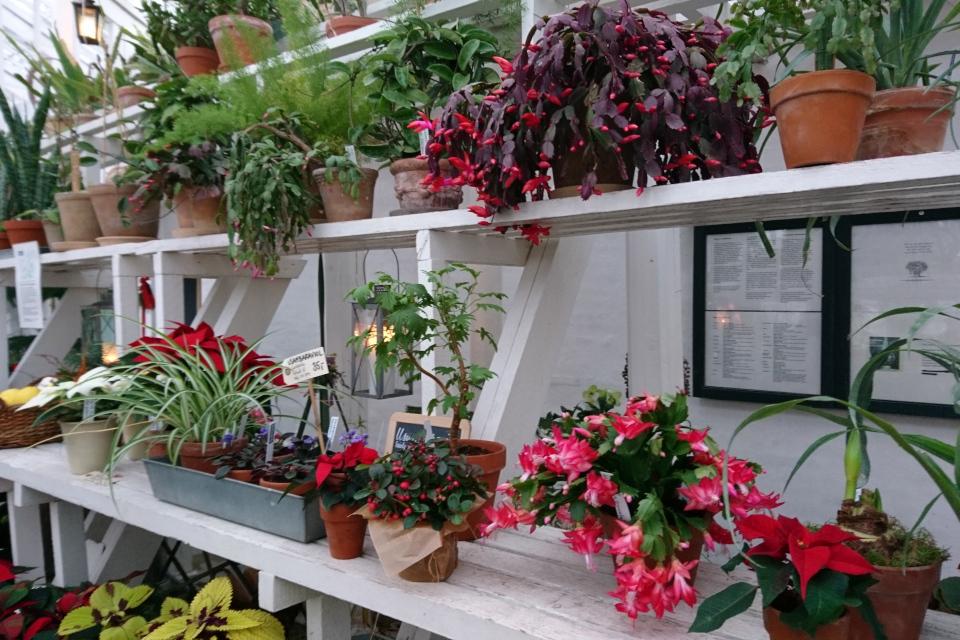 Рождественские растения в старой оранжереи 1800 х годов