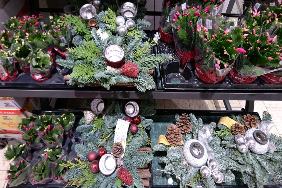 Шлюмбергера с бутончиками продается в разделе рождественских товаров