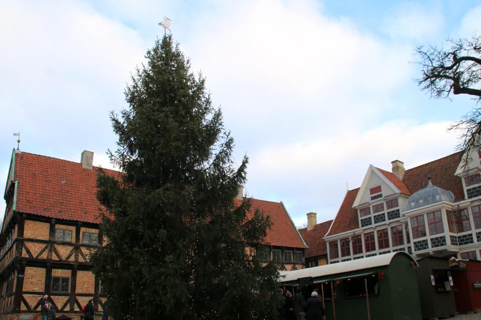 Рождественская ель под рождество посреди площади в Старом Городе