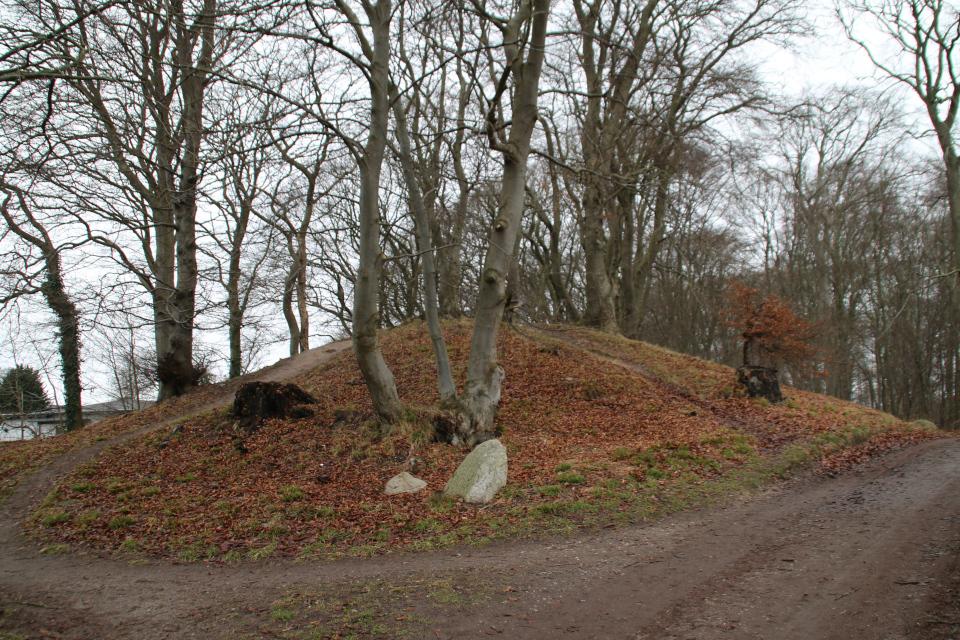 Курганы в лесу Киркесков, г. Орхус, Дания. 24 янв.2021