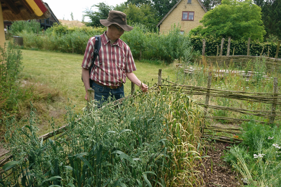 Огороды викингов Фюркат. Фото 11 июл 2019, Дания