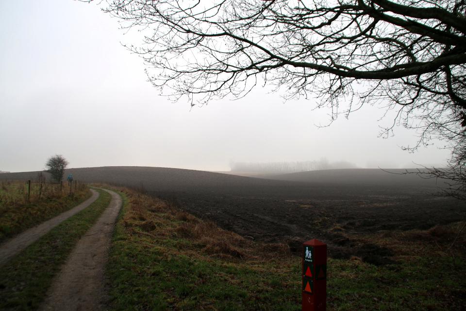 1 января 2021, Кастед, Дания. Kasted mose. Trampesti