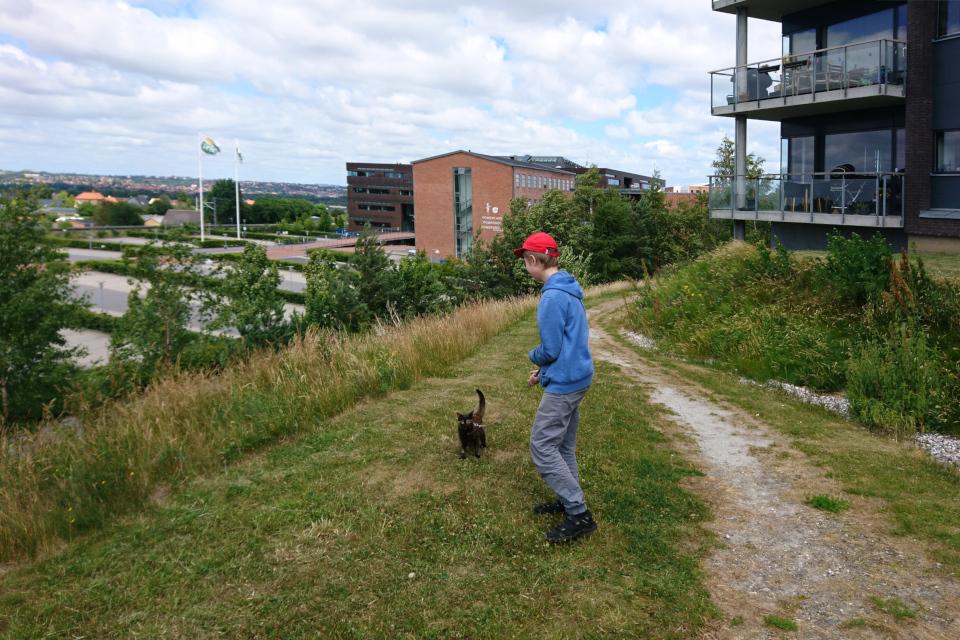 Мой сын с кошкой Флора на холме с видом на город