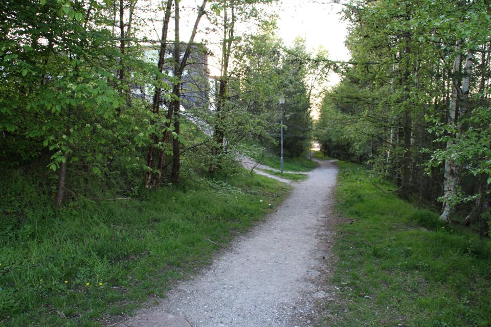 Дорожка с дикорастущими деревьями к зданию Arla