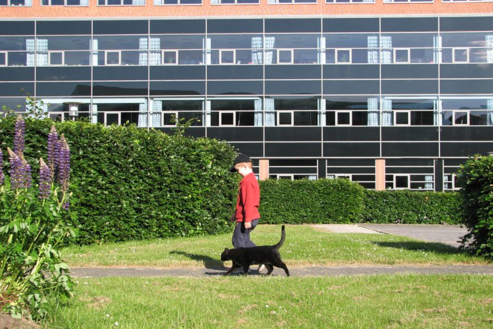 Мой сын и кот Пушкин парке, расположенным между зданием штаб-квартиры Arla