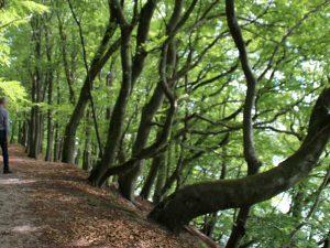 Внутренний лес озера Хальд