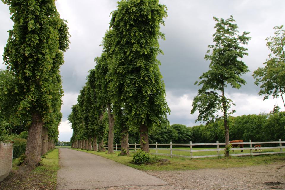 Вид на дорогу со стороны липовой аллее в поместье Граубалле (Grauballegård)