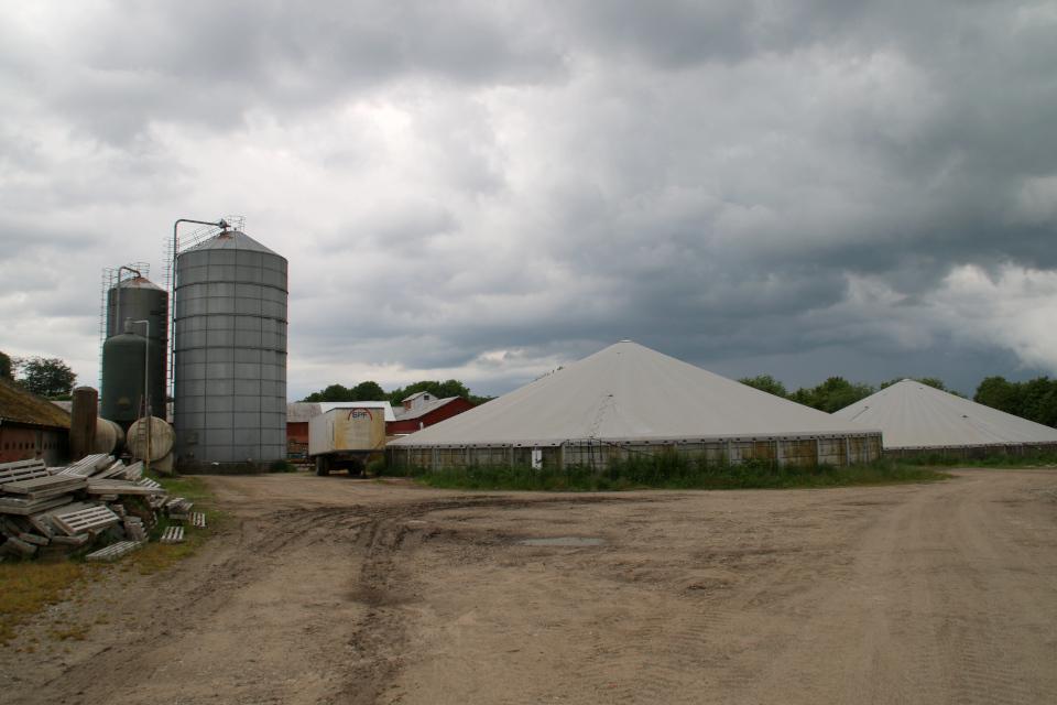 Свинокомплекс поместья Граубалле. Фото 7 июн. 2020, Дания