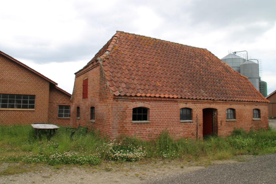 Подсобные постройки усадьбы Граубалле, заросшие клевером, ясноткой