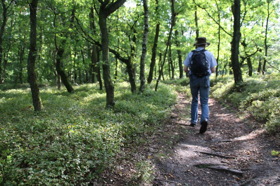 Дорожка в лесу. Холмы Доллеруп. Фото 6 сент. 2018