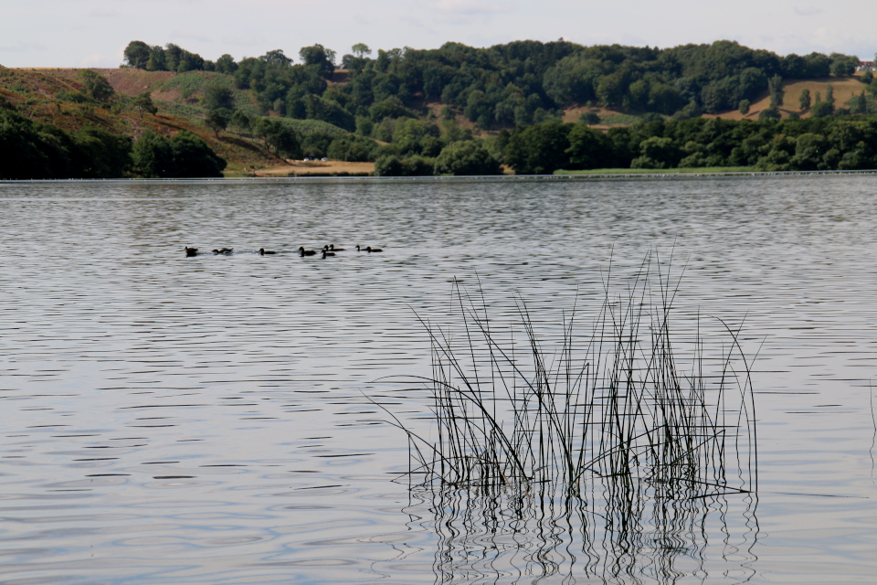 Озеро Хальд / Hald sø. Фото 6 сент. 2018