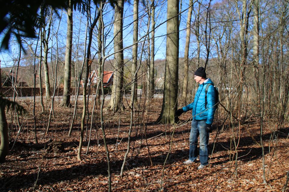 Гряды и борозды - бывшие пахотные земли в лесу Торсков возле дороги