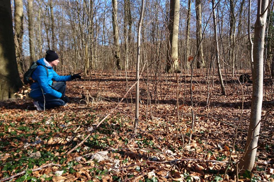 Место бывших полей с бороздами в лесу Торсков возле дороги