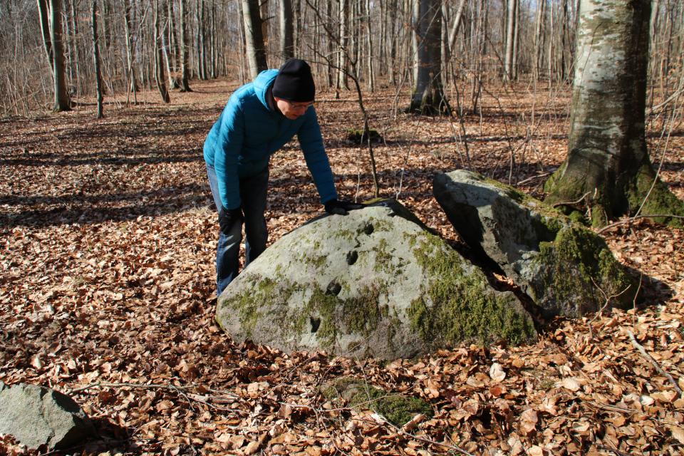 Колотый камень с лесу Хёррет, г. Морслет, Дания. Фото 17 мар. 2021