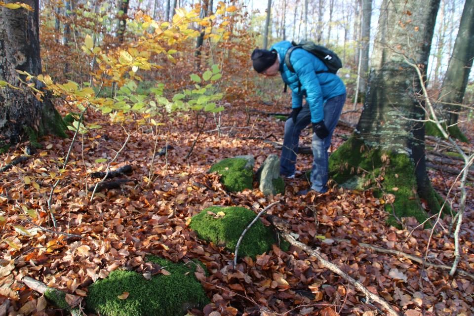 Колотый камень на месте разрушенного каменного кургана в лесу Мосгорд