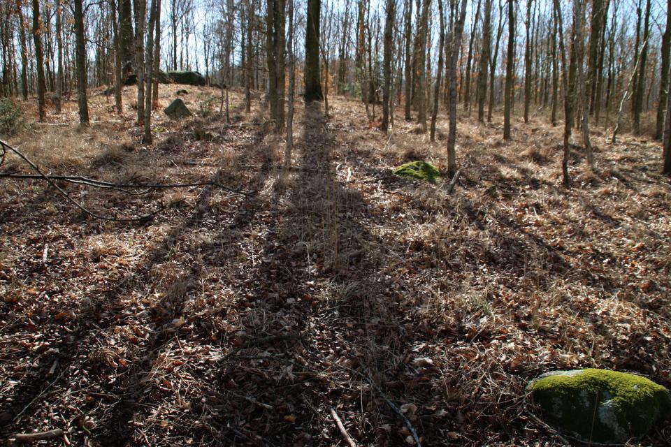 Лес Равнсков, надколоты камень. 9 мар. 2021, Оддер, Дания
