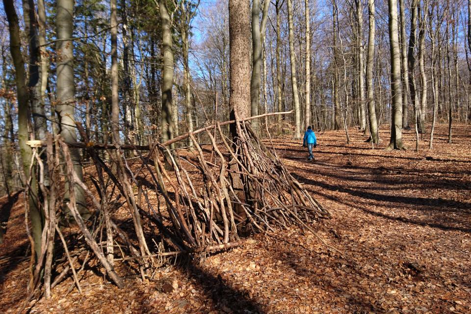 В буковом лесу Торсков. Фото 16 мар. 2021, г. Хойбьерг / Орхус, Дания