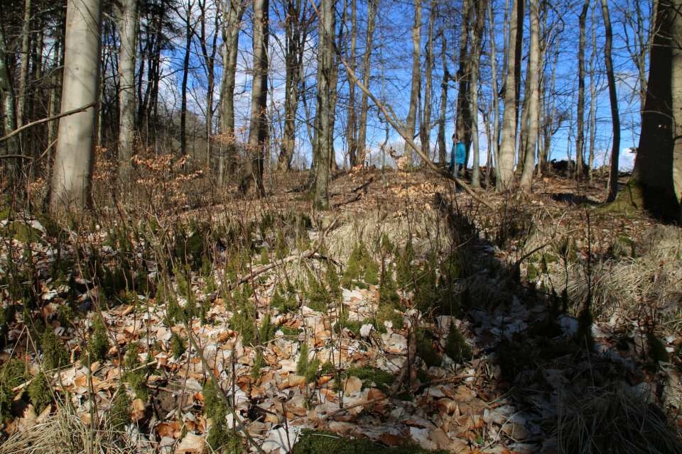 Буковый лес и мховый лес Хёррет (Hørret skov) Дания. 18 мар. 2021