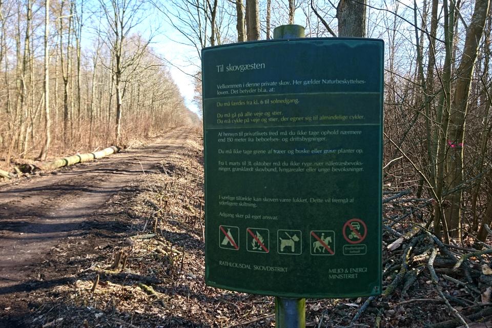 Лес Равнсков - частный лес. 9 мар. 2021, Оддер, Дания