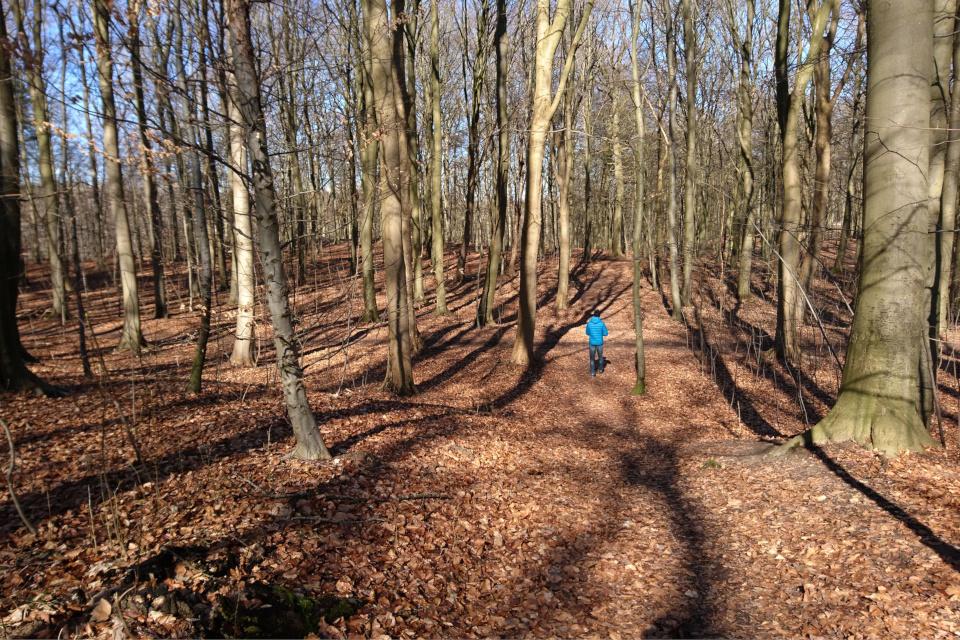 Бывшие террасные поля в лесу Торсков. Фото 16 мар. 2021, г. Хойбьерг , Дания