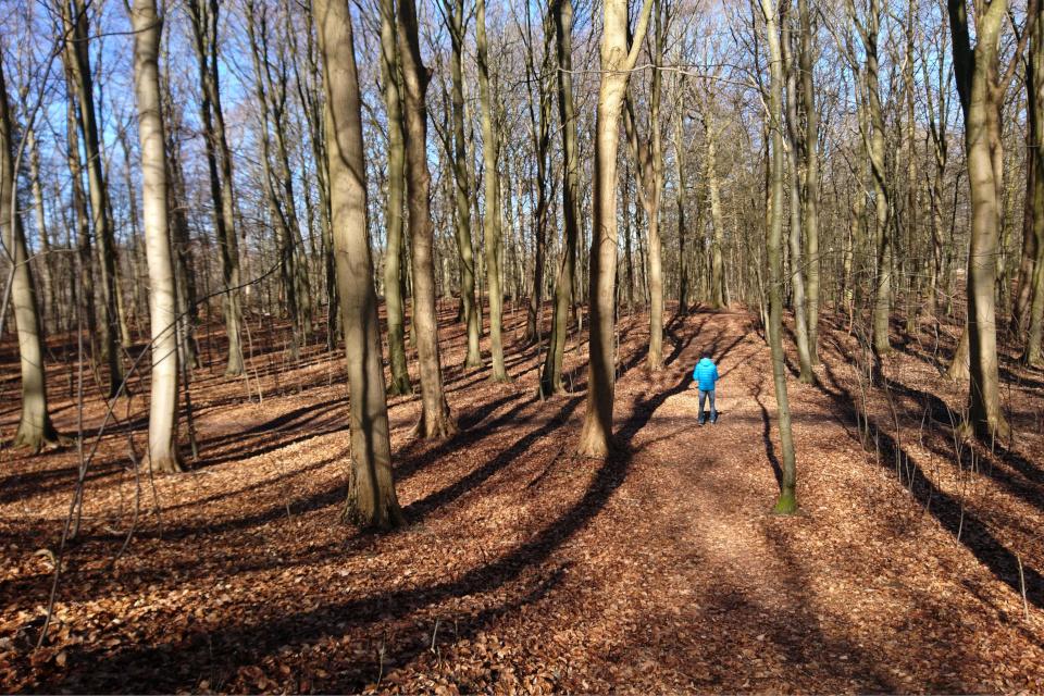 Заметные широкие ступенчатые террасы в лесу Торсков