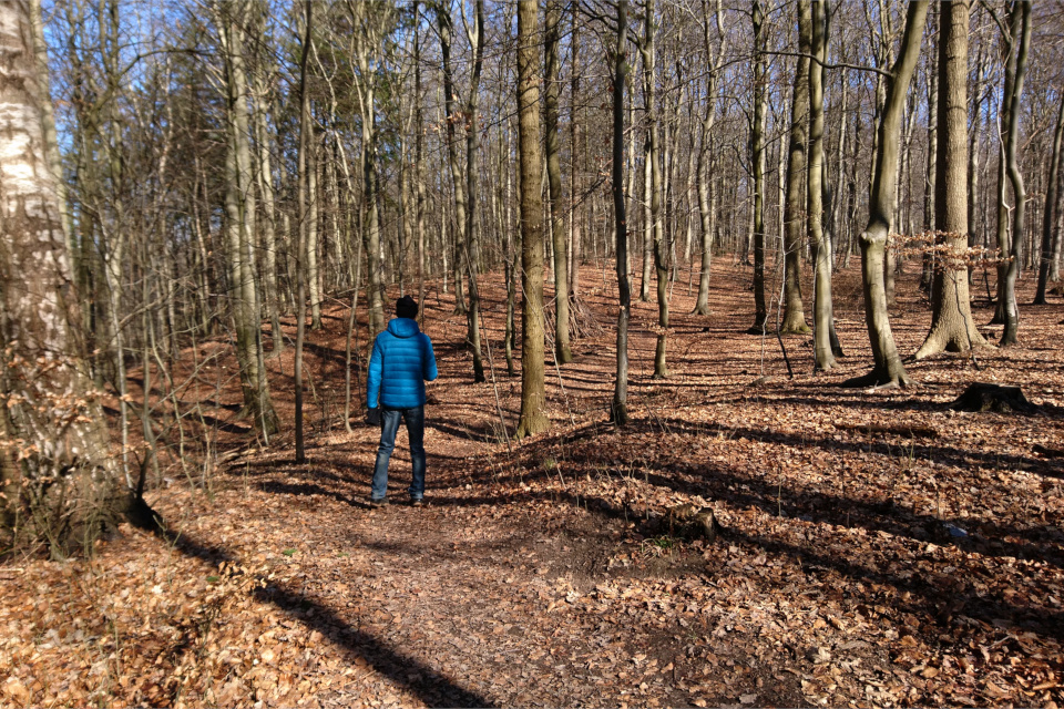 Бывшие террасные поля в лесу Торсков. Фото 16 мар. 2021, г. Хойбьерг, Дания