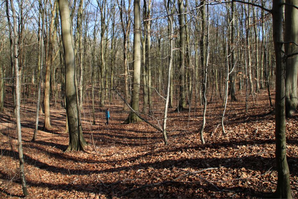 Бывшие террасные поля в лесу Торсков. Фото 16 мар. 2021, Орхус, Дания