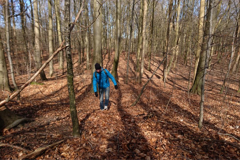 Ступенчатые террасы в лесу Торсков. Фото 16 мар. 2021, г. Хойбьерг / Орхус, Дания