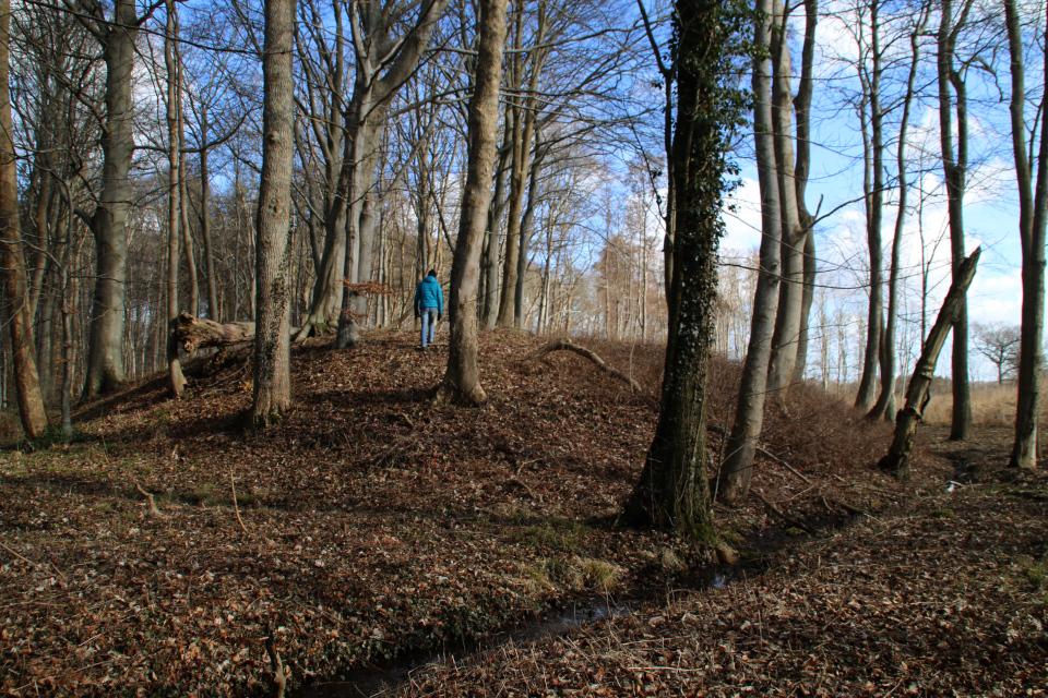 Холм средневекогого замка Кйэргорд, Дания, 14 мар. 2021